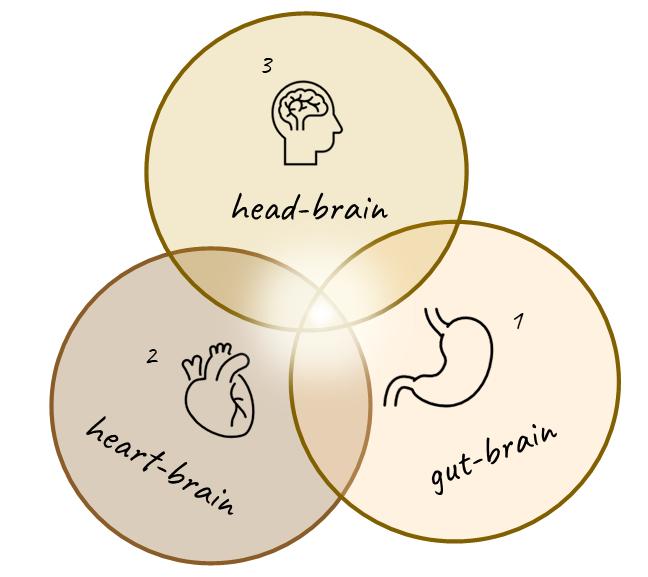 Trije živčni centri